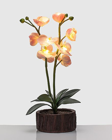 wunderh bsche orchidee mit led beleuchtung kunstblume pflanze timer batterie ebay. Black Bedroom Furniture Sets. Home Design Ideas